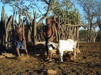 Himba child with goats