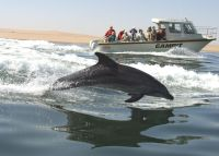 Dolphin Cruise