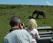 Viewing elephant from a safari vehicle